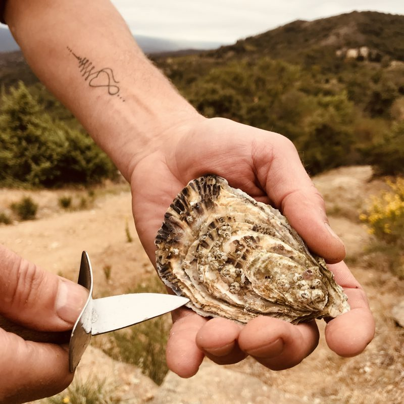 Oyster knife with oyster